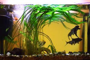 Akwarium w Holu